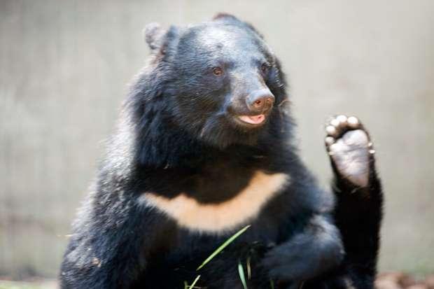 クマと遭遇時の対処法