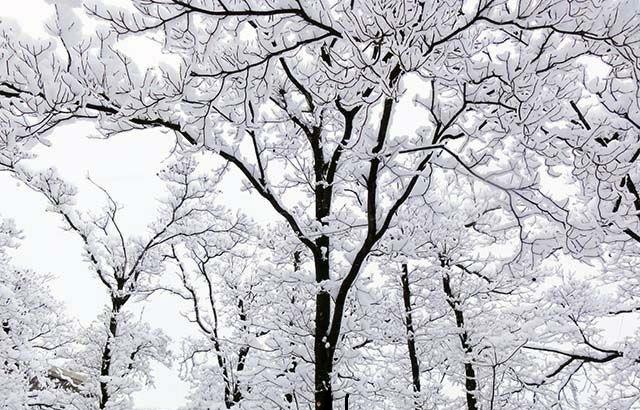 雪木立.jpg