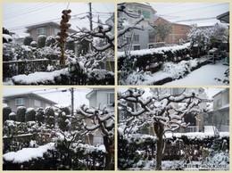 62閏日の雪Feb29(水)2012.jpg