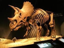エスペロサウルスa.jpg