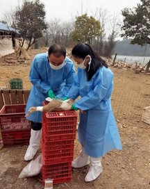 中国で鳥インフルエンザ.jpg