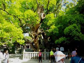 大山祇神社1.JPG