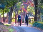 散歩する中国人.jpg