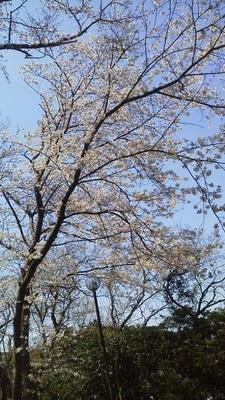 野島公園201704.06.jpg
