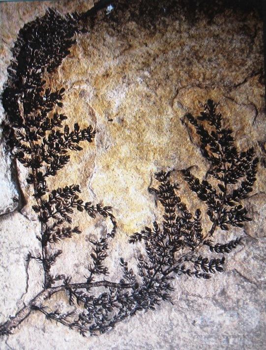 1億3000年前の花