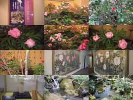 20120405ボタン園「由志館」.jpg