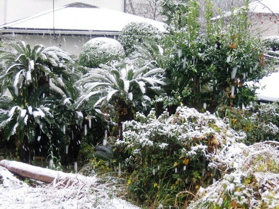 Schneefall 24.Nov.2016.JPG