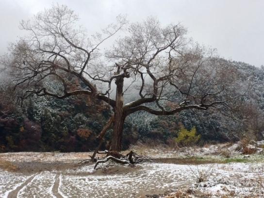 常陸太田雪景色