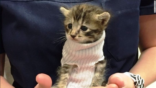 kitten-sweater-trnd