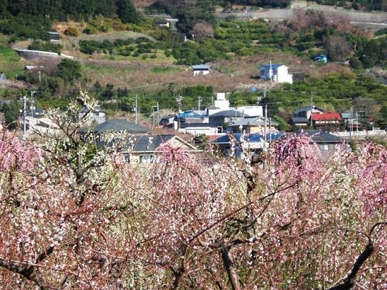 sogabairin 8 20090221.JPG